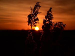 foto di tramonto, tramonto tramonto in campagna in secondo piano
